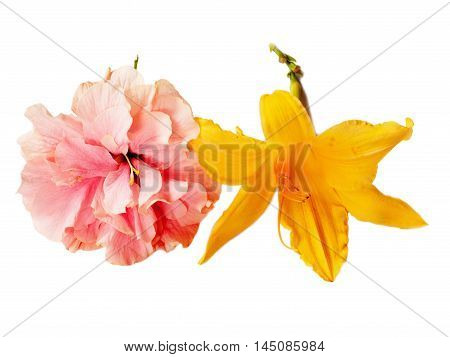 Beautiful pink hibiscus and yellow daylily flowers isolated on white background.
