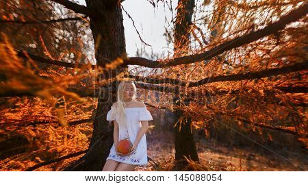 A woman dressed in a white dress with embroidery holds a pumpkin hands. She sits on the branch of spruce. Sunlight painted the picture in warm tones.