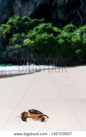 Crab,krabi,thailand