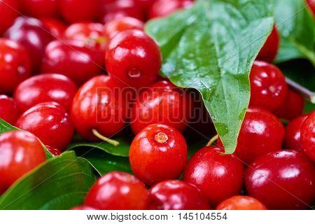 Ripe cornelian cherry (Cornus mas). Fruit background