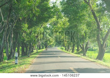 A road with green trees along both sides of country area in Thailand