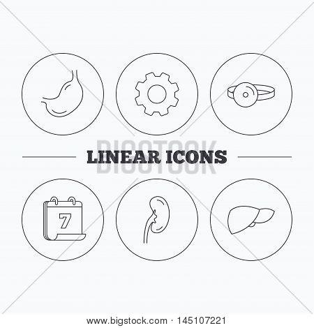 Kidney, liver and stomach organ icons. Medical mirror linear sign. Flat cogwheel and calendar symbols. Linear icons in circle buttons. Vector