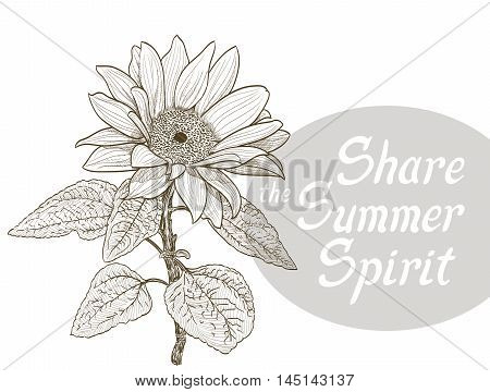 sunflower and share the summer spirit quote. vector