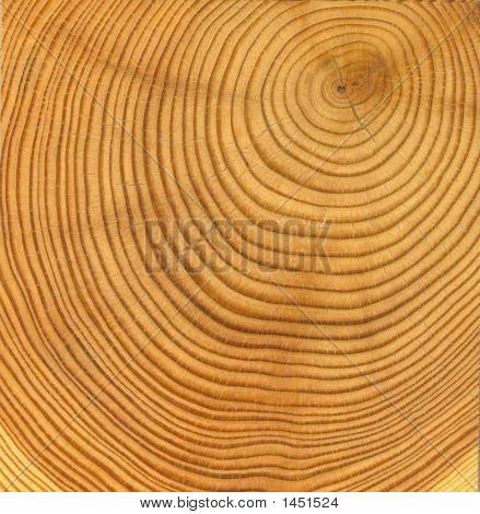 Textura de corte de madeira