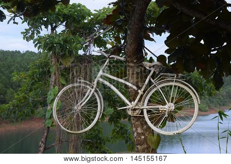 decoration of bicycle hanging on the tree