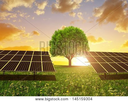 Solar energy panels and tree on meadow at sunset. Sustainable resources.