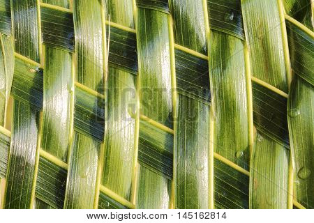 Zigzag interlocking of coconut leaves weave for background