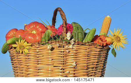 organic gardening products.Garden vegetable varieties.Organic foods.Vegetables menu.