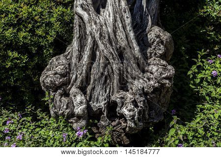 Rough old battered crooked tree stem surrounded with green bushes and purple flowers