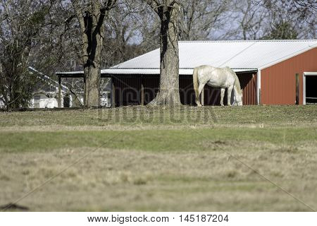 blank foreground with white horse and red barn in the background