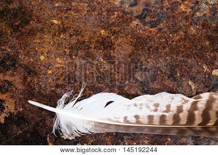 Buzzard Feather On Rusty Ground, Copyspace