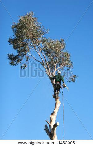Baum-Trimmer
