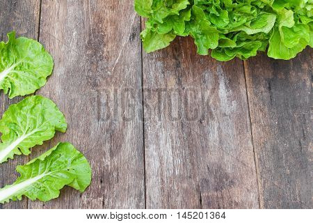 chinese cabbage organic vegetables on a wooden table. Insect eat hole in the leaf. with copy space.