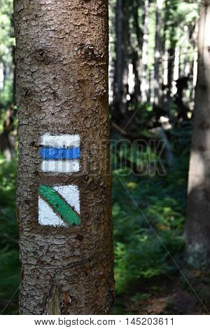 Tourist signs on tree. Tourist signs forest.