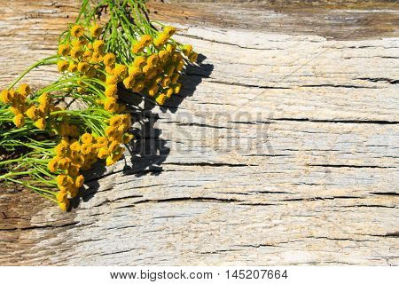 Flowers of tansy on the wooden background