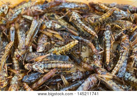 fried grasshoppers or locusts, edible insect, crispy