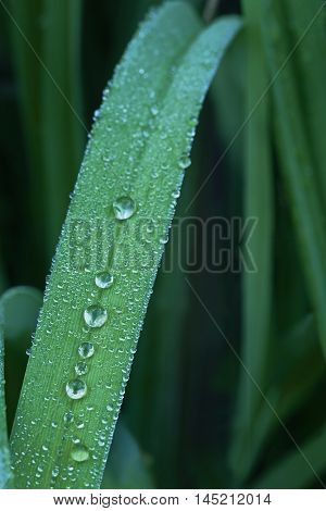 Macro view on grass with water drops