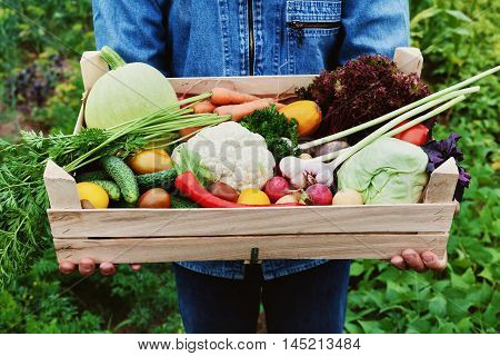 The farmer holds in his hands a wooden box with a crop of vegetables and harvest of root on the background of the garden. Organic food.