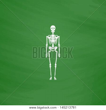 Skeletons - human bones. Flat Icon. Imitation draw with white chalk on green chalkboard. Flat Pictogram and School board background. Vector illustration symbol