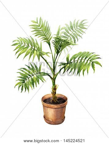 Hand drawn pot plant. Watercolor green palm in clay flowerpot isolated on white.