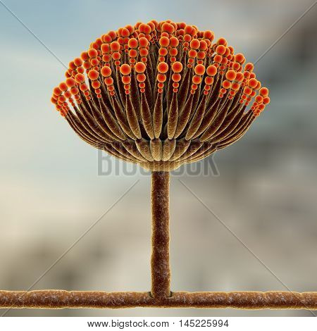 Fungi Aspergillus, black mold which produce aflatoxins and cause pulmonary infection aspergillosis, 3D illustration