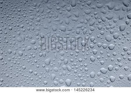 full frame dew drops closeup in blue back