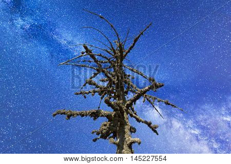 Dead Mossy Tree Milky Way