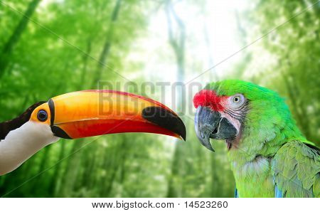 Toco Toucan And Military Macaw Green Parrot