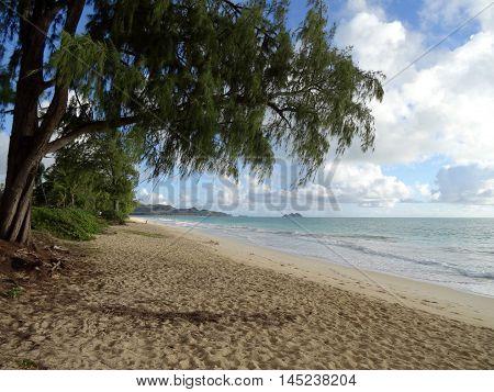 Ironwood Trees hang over Waimanalo Beach looking towards mokulua islands on Oahu Hawaii.