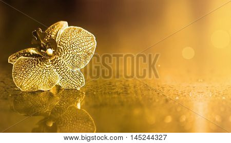 Beautiful golden orchid flower background with copy space