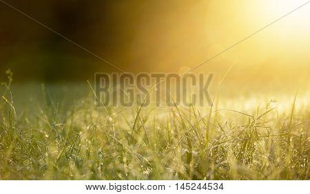 Grass at dawn with golden lights - nature website banner
