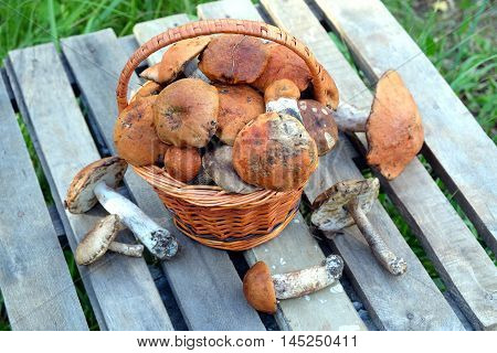 Still life with many edible mushrooms  in brown wicker basket on wooden table closeup wooden table. Top view outdoors against green grass