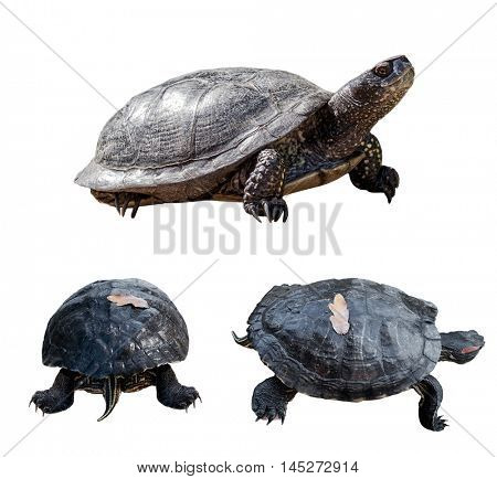 Set of turtles. turtles from different sides. isolated over white background.