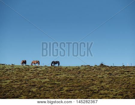 Horses near Bilbao in the North of Spain in Europe during summer