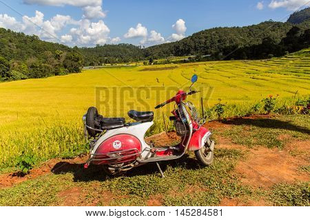 CHIANG MAI THAILAND - NOV 1 2013: Vespa parked along the road at green terraced rice field in Mae Klang Luang Mae Chaem Chiang Mai Thailand