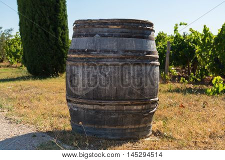Wine barrel on vineyards in chateau Chateauneuf-du-Pape France summertime