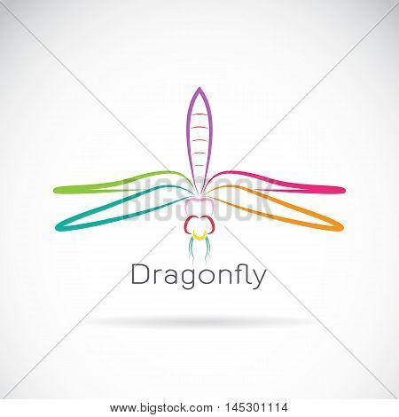 Vector of dragonfly on a white background