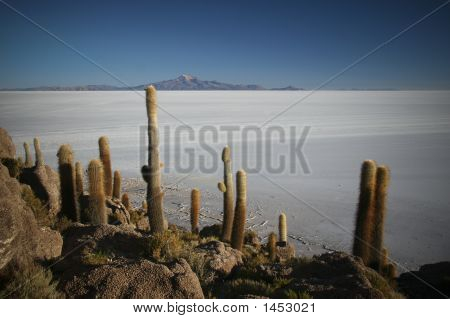 Isla Del Pescado - Uyuni Salt Flat - Bolivia