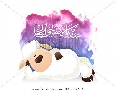 Baby Sheep, Arabic Calligraphy Text Eid-Al-Adha Mubarak for Muslim Community, Festival of Sacrifice Celebration.
