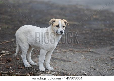 Very cute mixed breed puppy is waiting for the mom.
