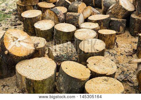 Wooden Logs Of Oak Tree