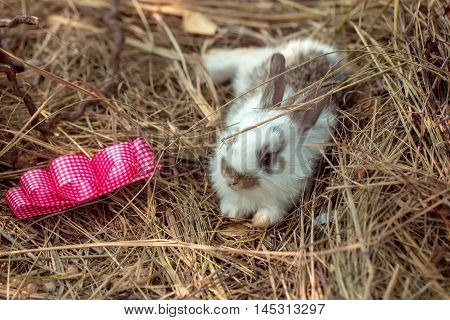 Cute Rabbit And Red Bow