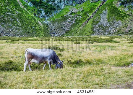 Summer Landscape In The Alps With Cow Grazing