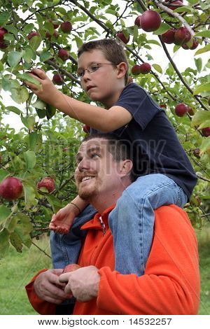 Father Holding Young Son On Shoulders To Pick Apples