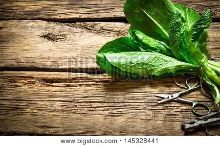 Bunch of sorrel with scissors. On a wooden table.