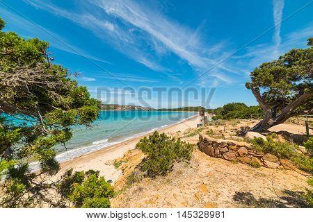 pine trees by the sea in Capo Coda Cavallo Sardinia