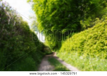 Country Path With Hedges On Either Side Out Of Focus.