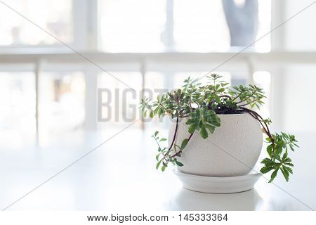 Green home plant in ceramic pot on the table in a backlight with copy space