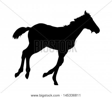 Running Foal Silhouette on White Background. Isolated vector illustration animal theme.