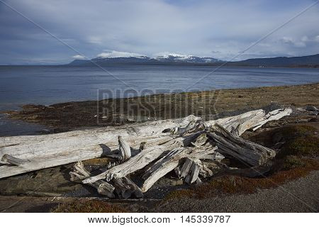 Old tree trunks washed up on the coast along the Magellan Strait in Patagonia, Chile